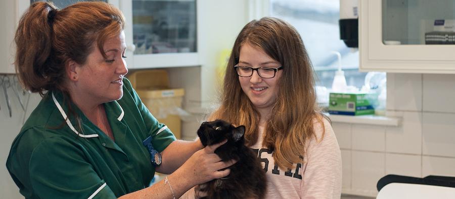 Braodway Vets Cats examination