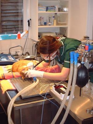Broadway vets - dentistry